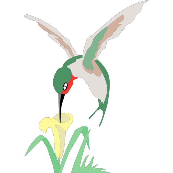 Green And White Hummingbird With Flower PNG images