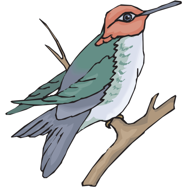 Hummingbird On A Branch PNG Clip art