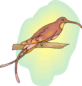 Brown Hummingbird Perched PNG images