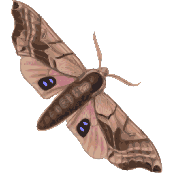 Moth PNG images