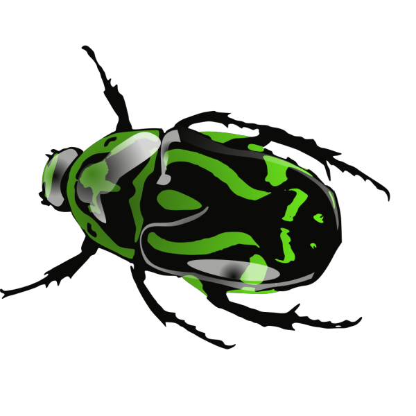 Green Beetle  PNG images