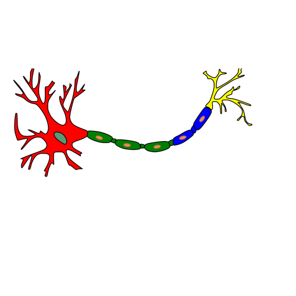 Neuron-colored PNG images