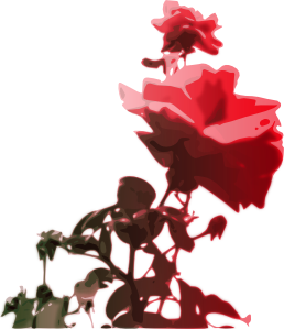 Beautiful Rose PNG image