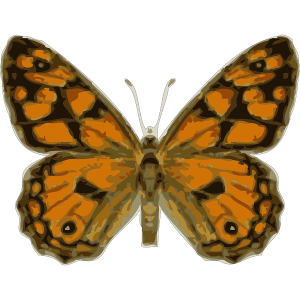 Butterfly Top View PNG Clip art