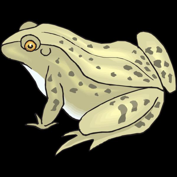 Speckled Frog PNG Clip art