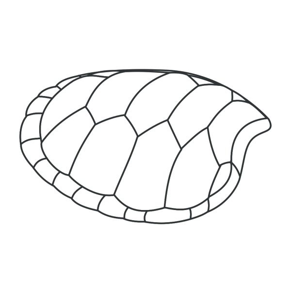 Turtle Shell Outline PNG Clip art