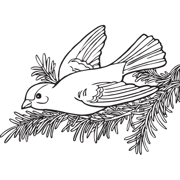 Coloring Book Willow Goldfinch PNG Clip art