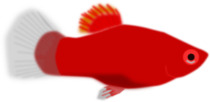 Orange Aquarium Fish PNG Clip art