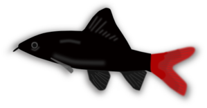 Red And Black Aquarium Fish PNG Clip art