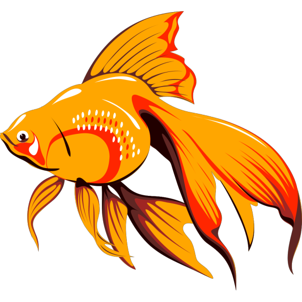 Goldfish With Long Fins PNG Clip art