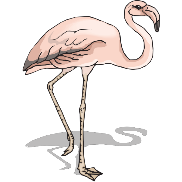 Flamingo With Shadow PNG images