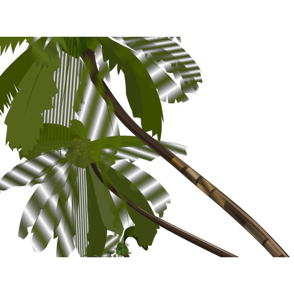 Vector Palm Trees PNG icon
