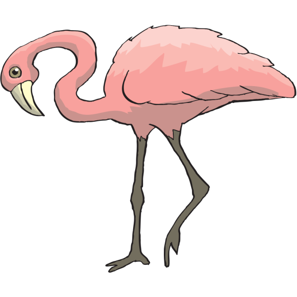 Curious Flamingo PNG images