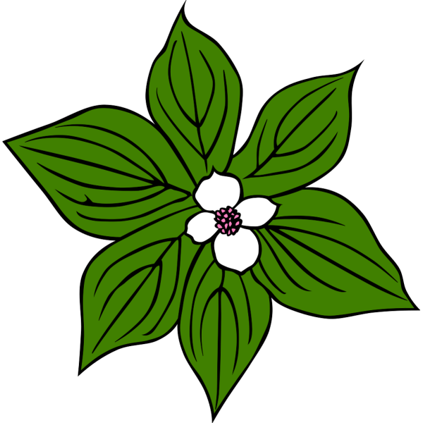 Green Plant With White Flower PNG Clip art