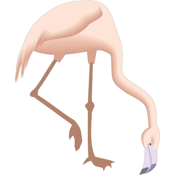 Flamingo Bending Down PNG Clip art
