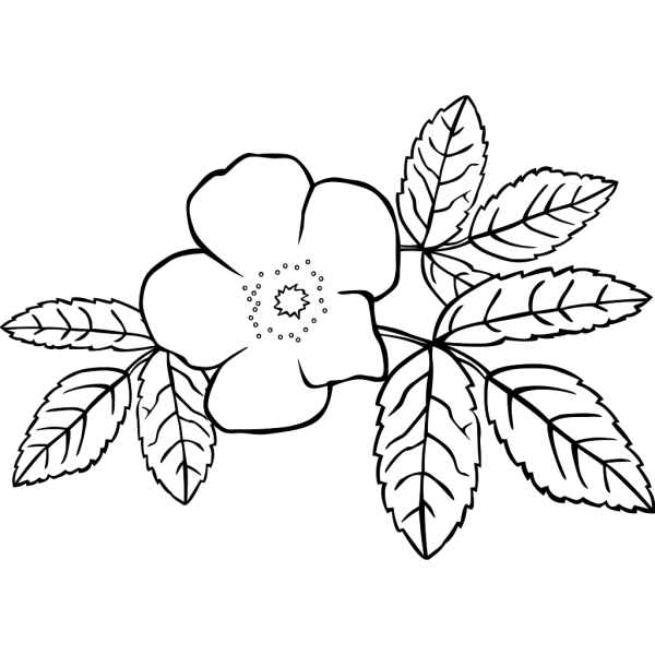 Prickly Wild Rose Coloring Page PNG Clip art