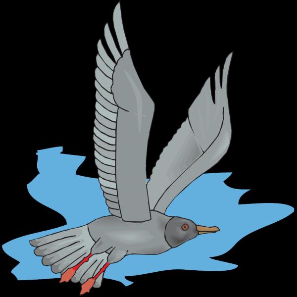 Flying Gull PNG Clip art