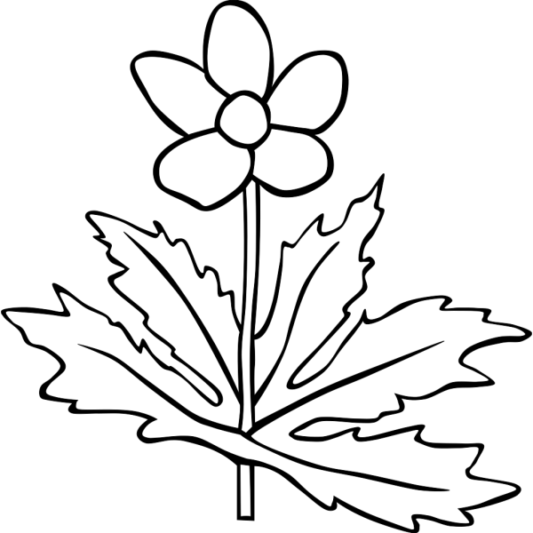 Canada Anemone Coloring Page PNG images