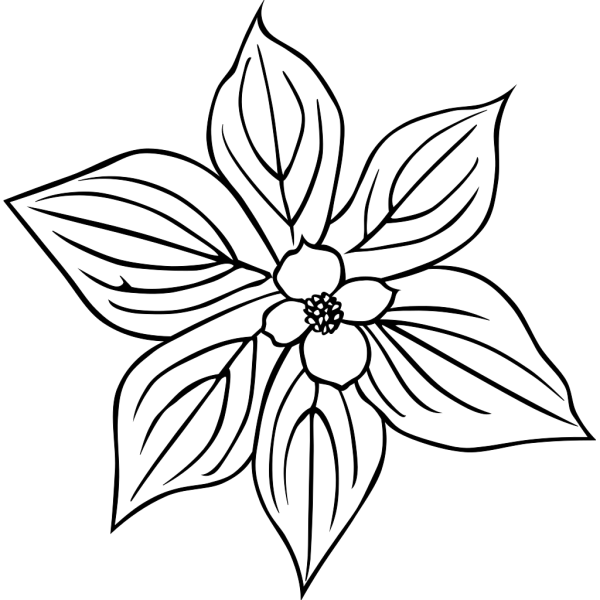 Creeping Dogwood Coloring Page PNG Clip art