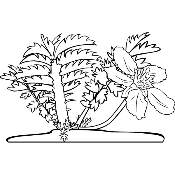 Common Silverweed Coloring Page PNG Clip art