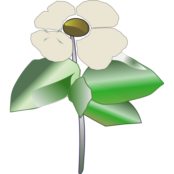 Pacific Dogwood Coloring Page PNG images
