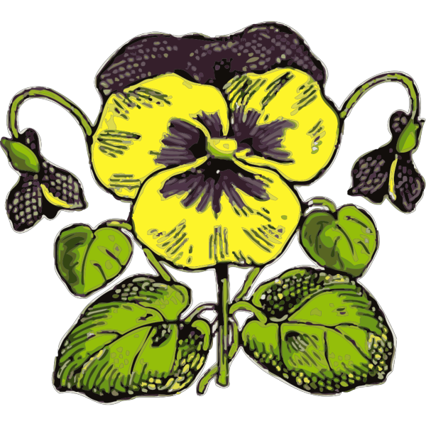 Pansy Illustration With Color PNG Clip art