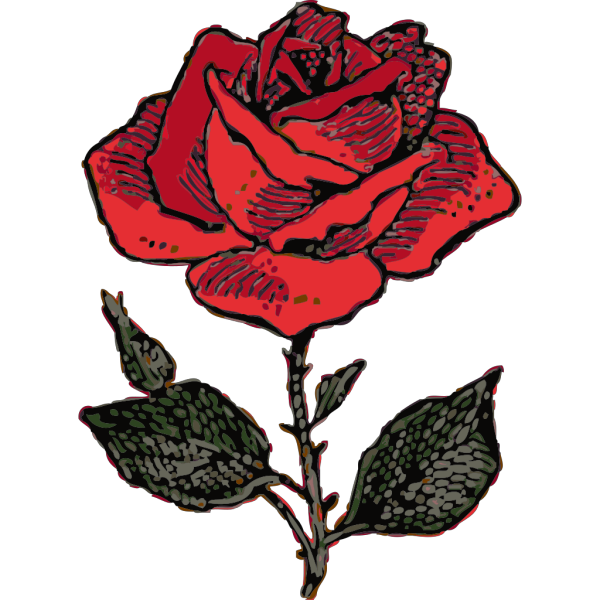Rose Illustration With Color PNG Clip art