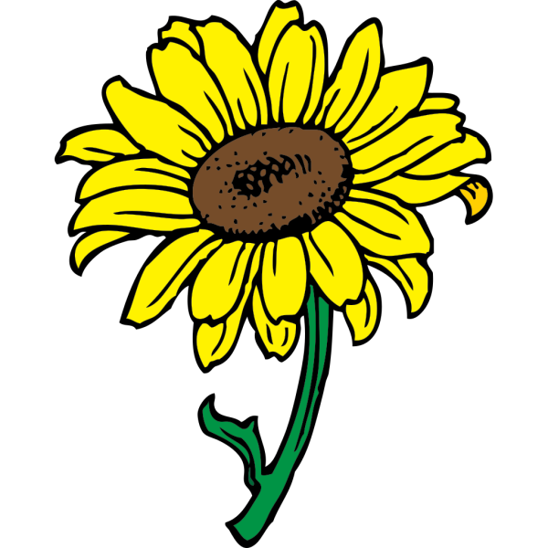 Sunflower In Color PNG Clip art
