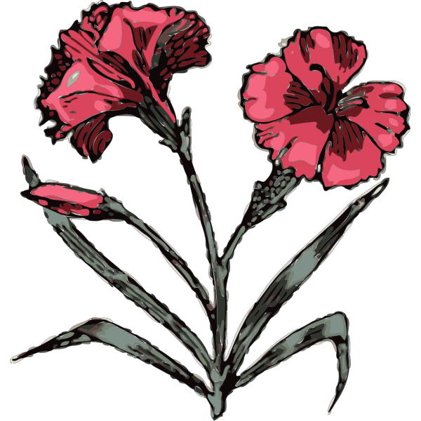 Carnation Illustration With Color PNG Clip art