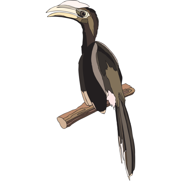 Hornbill Perched PNG images