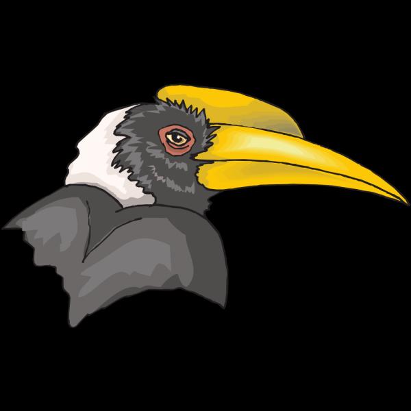Hornbill Head PNG Clip art