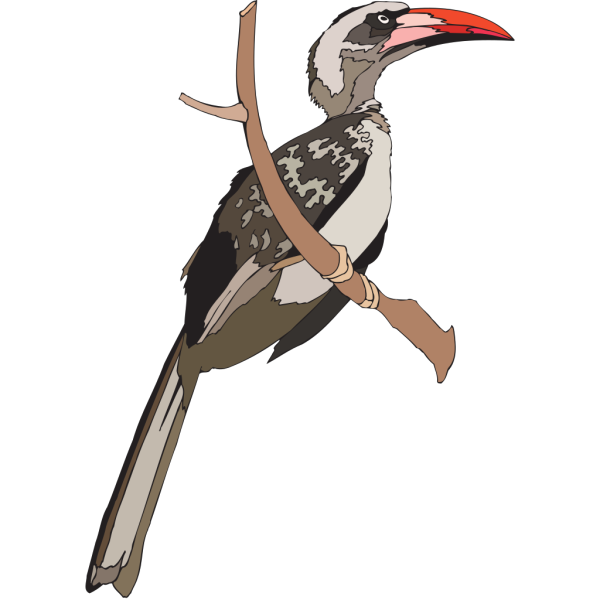 Perched Hornbill PNG images
