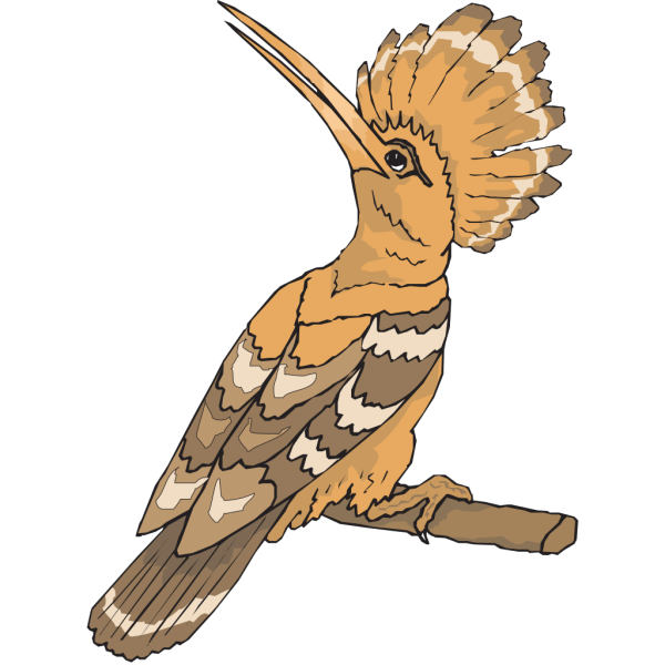 Perched Hoopoe Looking Back PNG images