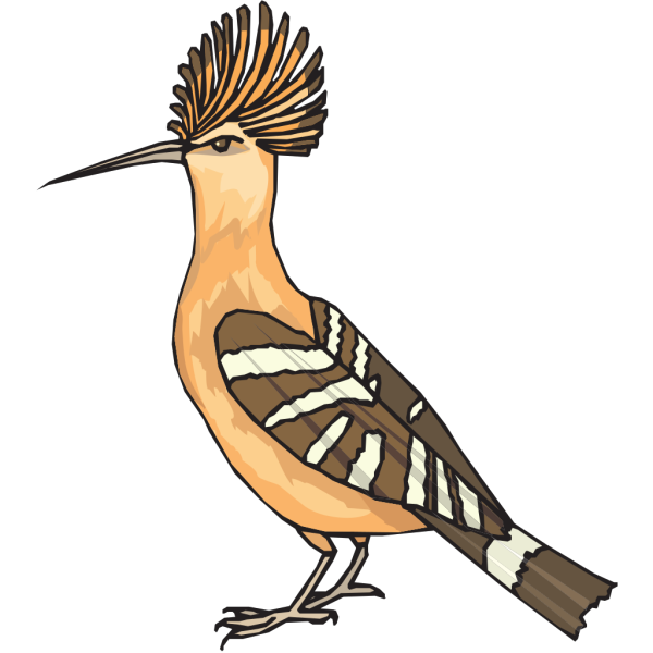 Angry Hoopoe PNG images