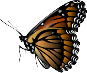 Monarch Butterfly At Rest Outline PNG Clip art