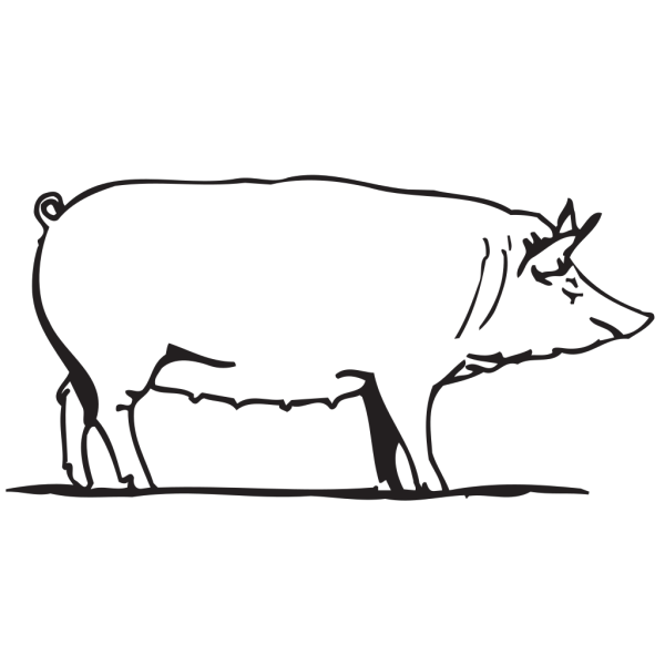 Pig Drawing PNG Clip art