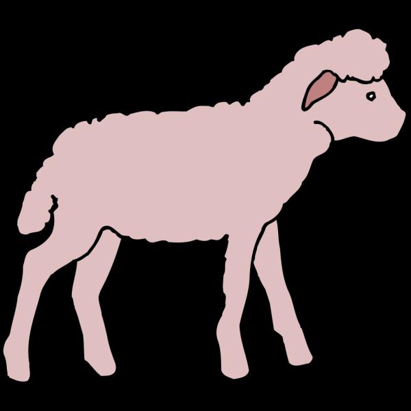 Pink Lamb PNG images