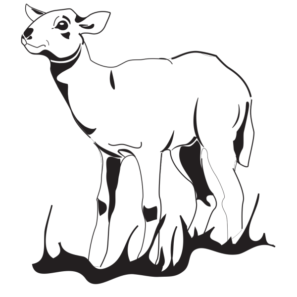 Lamb In The Grass PNG images