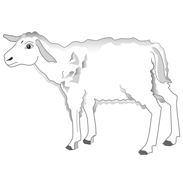 Cautious Lamb PNG images