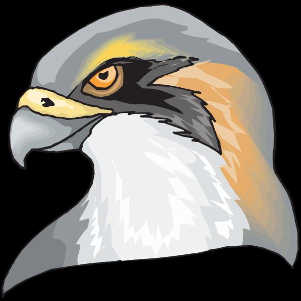 Brown Hawk Head PNG images