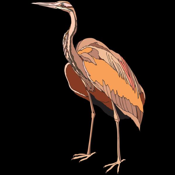 Brown Heron Standing PNG images