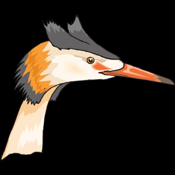 Heron Head PNG images
