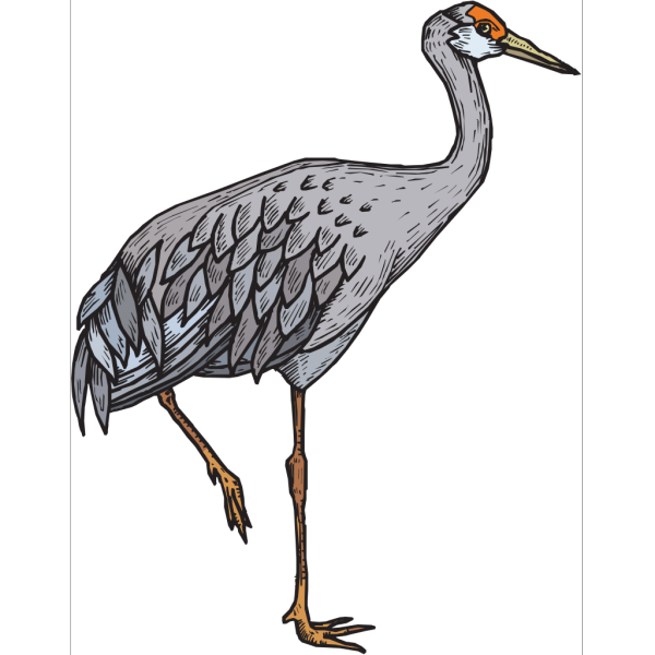 Gray Heron Standing On One Leg PNG Clip art