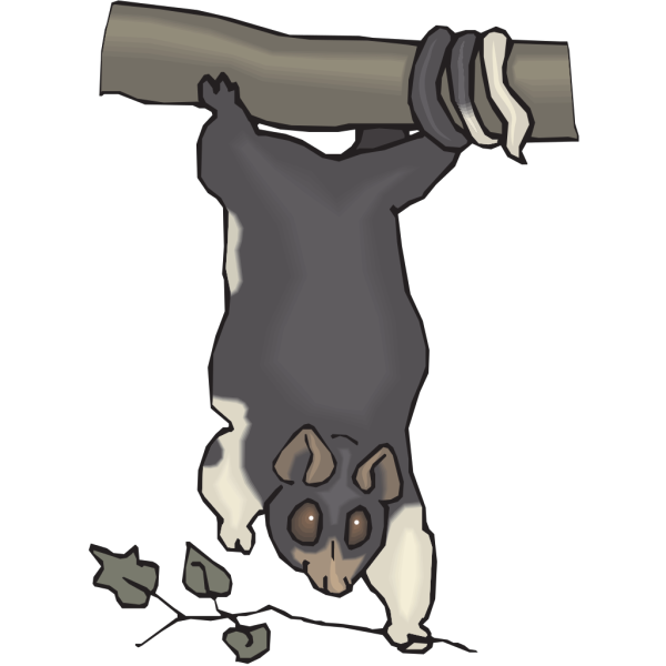 Hanging Cuscus PNG images