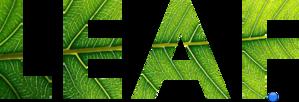 Coypu Eating A Leaf PNG Clip art