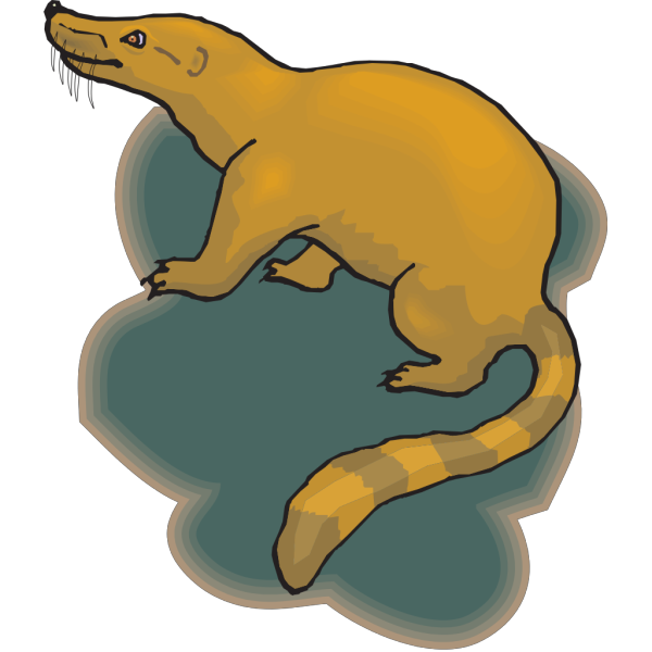 Shadow Coatimundi PNG images