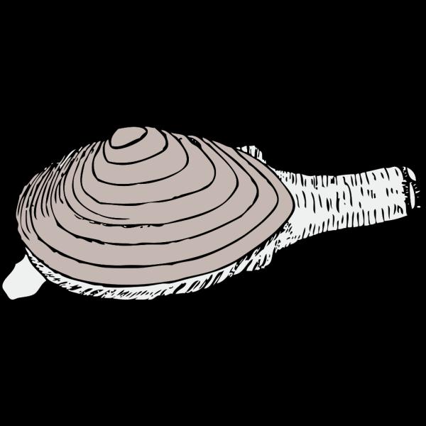 Clam PNG Clip art