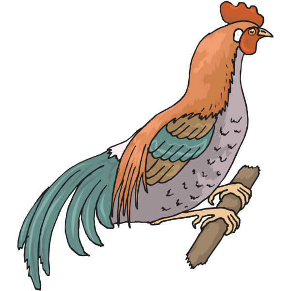 Perched Chicken PNG Clip art