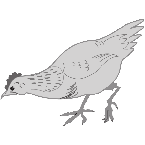 Grayscale Chicken Eating PNG Clip art
