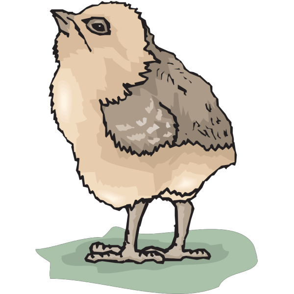 Chick Looking Up PNG Clip art
